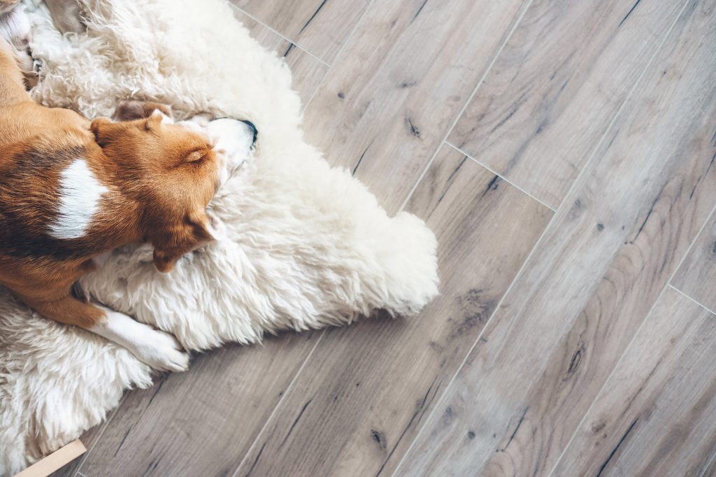 Dog napping on a rug on a durable faux wood vinyl floor.